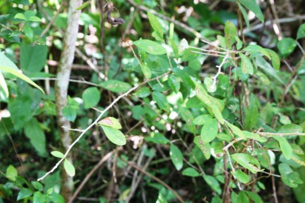 Особенное растение