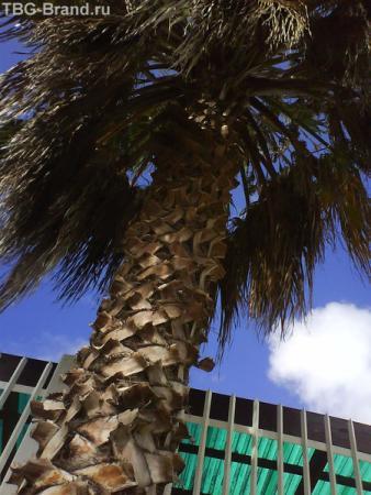 Просто пальма.