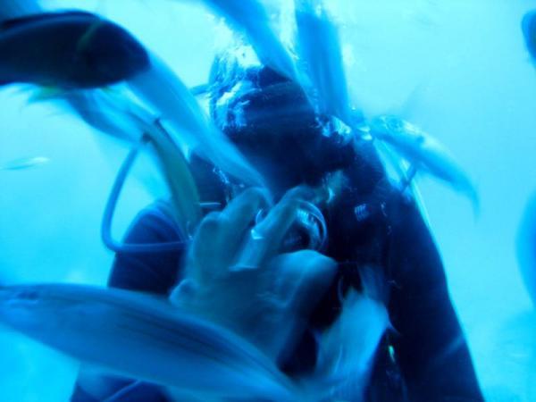 Любимец подводного мира
