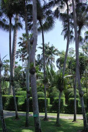 Шумел сурово тайский лес