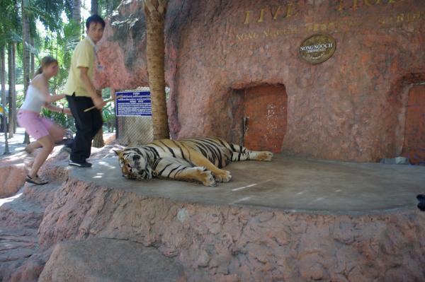 Тигр: как же вы меня задолбали