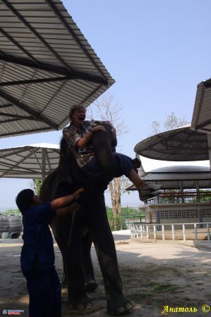 Что слон, что Боинг - все равно страшно!