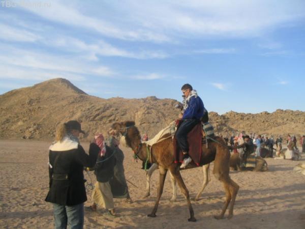 На верблюде