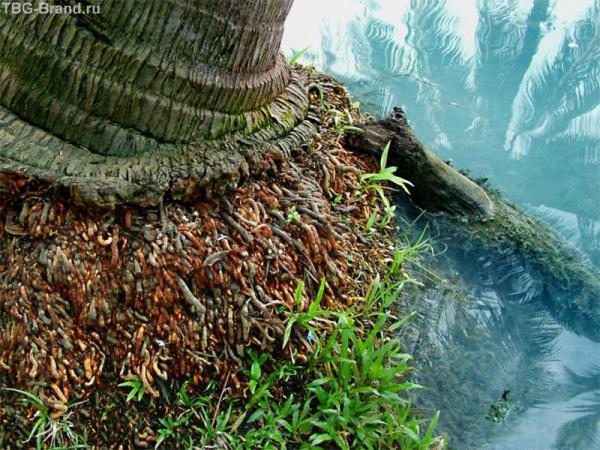 Сероводородная речка
