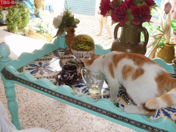 Кошка в бокале
