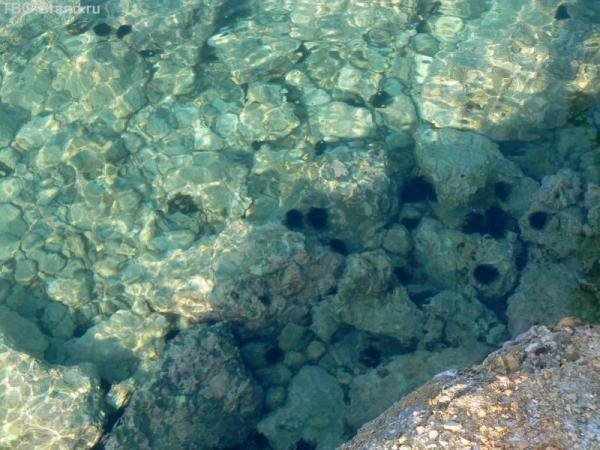 Морские ёжики