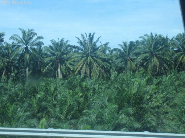 по пути в аэропорт, просто море зелени