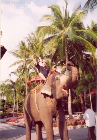 На слонах за счастьем