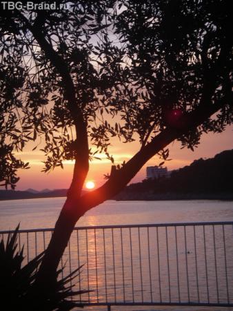 романтическое свидание - солнце и дерево