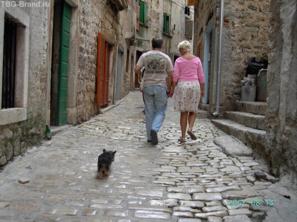 Ровинь. Эта собачка явно знает дорогу!.. Или ее хозяева...