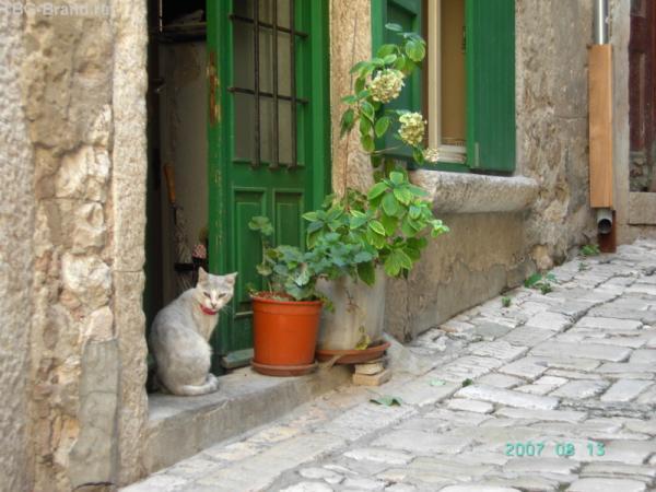 Ровинь. Серебристый кот. Кис-кис-кис...
