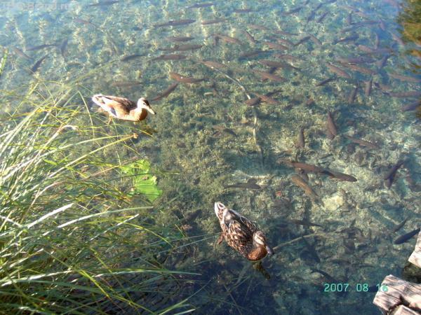 и рыбки