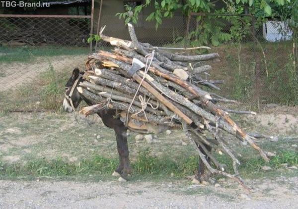 Бухарский ослик