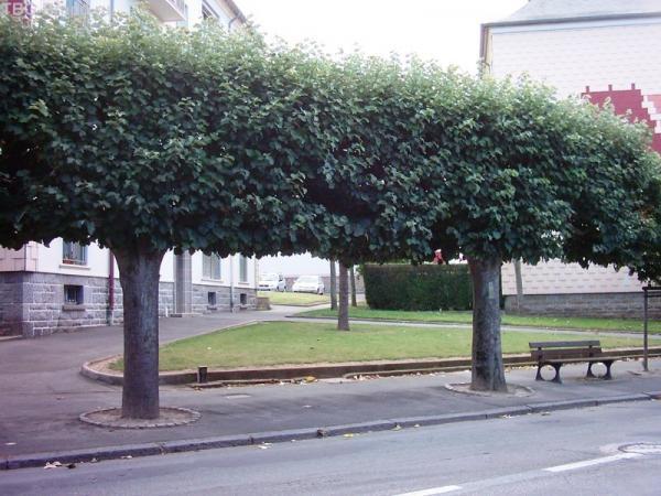 Просто... деревья
