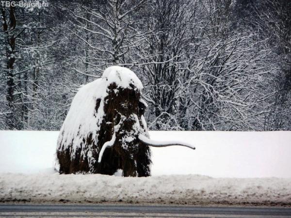 Мамонт крупно - ближе не подойти: трасса, а за ней сразу снежная целина.