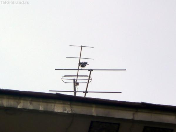 Чайка на антенне - всегда было интересно, как это отражается на... :)))