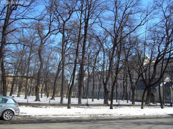 За оградой - сад РАХ