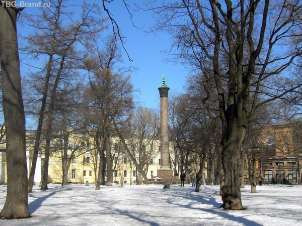 замечательное дерево во весь рост и колонна Брюллова