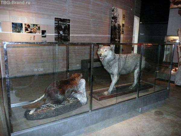Волк - зубами щелк