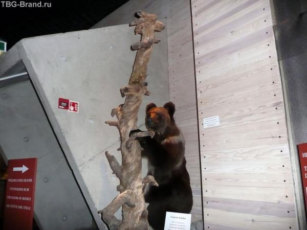 Маленький медведь. А за моей спиной - проход в чудо-комнату