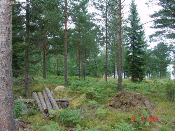 Заповедно - ухоженный лес. И такое возможно...