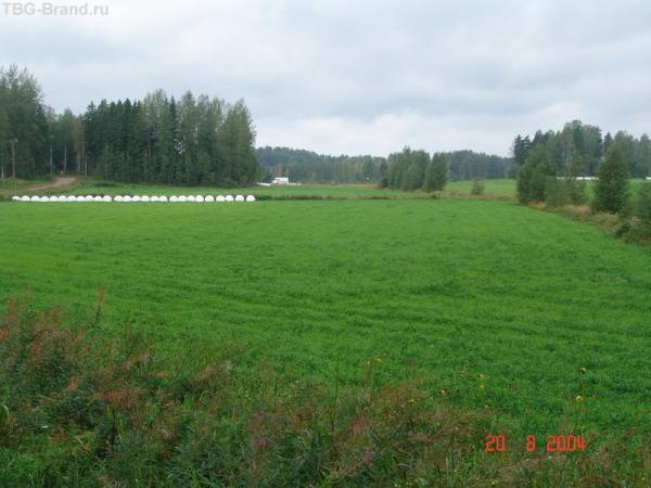 Белый полиэтилен на горизонте - это высокотехнологичные финские стога....