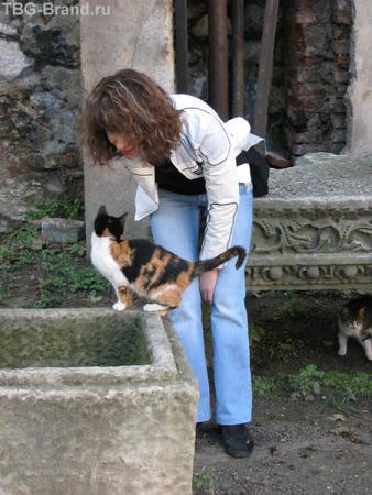 ...и кошки...