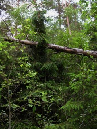 Дорога к морю идет через сказочный лес.