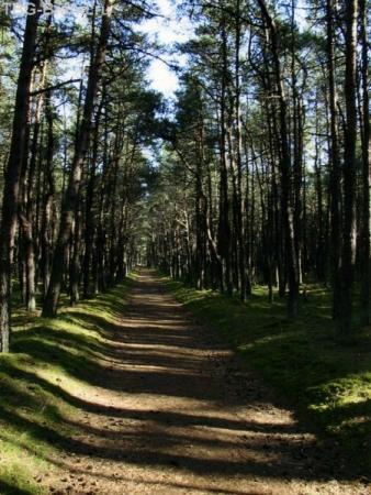 """В """" Танцующий лес""""."""