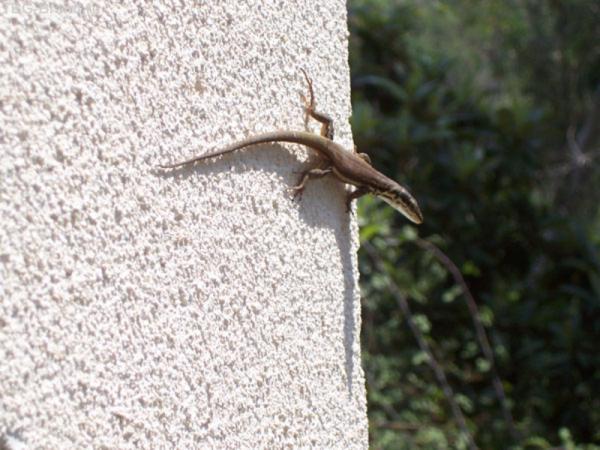 №2...и ящерка на стене вертикально пригрелась...