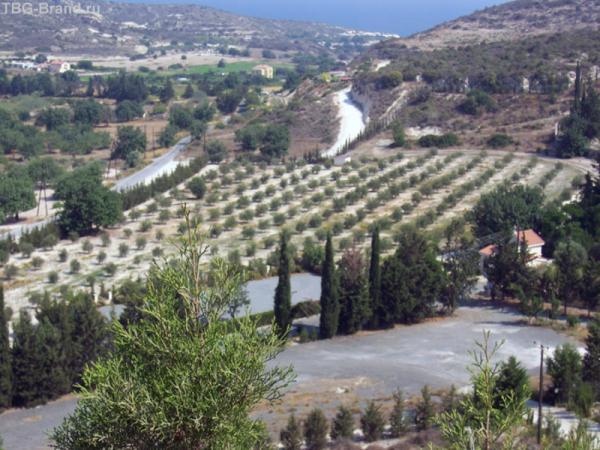 По дороге из Куриона в Пафос - типичные кипрские ландшафты.