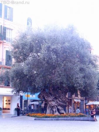 Дерево у Мэрии
