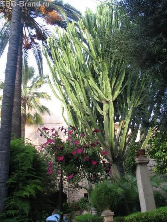 Арабские бани. Внутренний сад