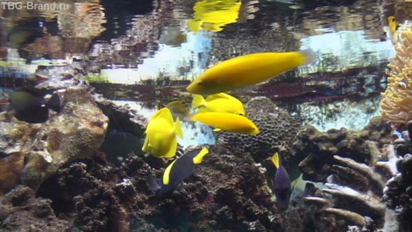Ой, мам, гляди, какие рыбки!!!