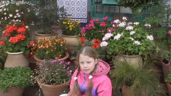 Средиземноморский цветник