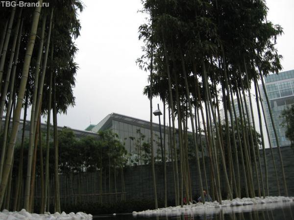Бамбук у входа в отель