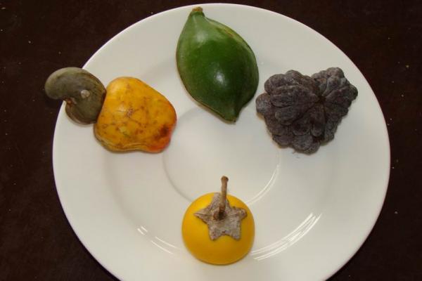 Плоды, собранные нами в местных лесах, но так и неопознанные