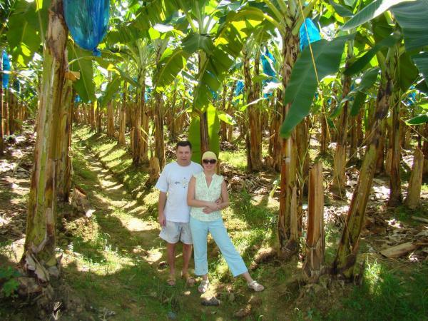 Банановая плантация (остров Сент-Люсия)