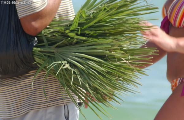 палма-палма-пакупай дрюг
