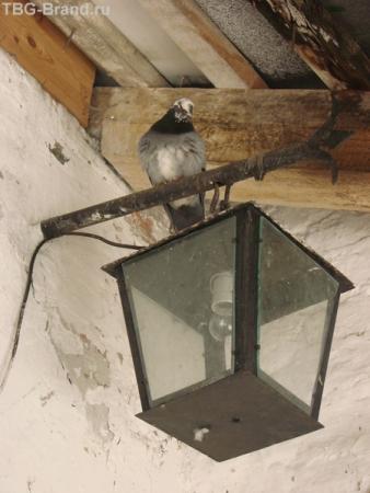 птица мира в гармонии с историей