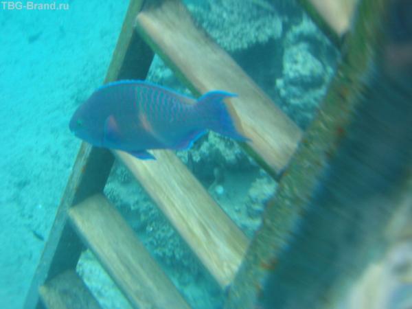 спуск с пирса в воду, как его видят рыбки