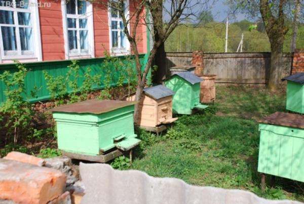 а тут пчёл живёт