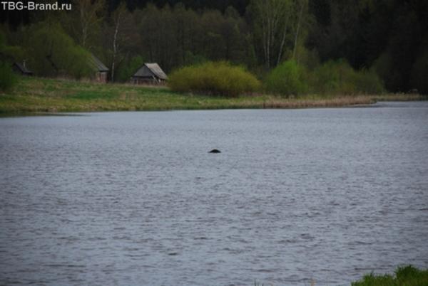 Лох-Белорусское животное. Видите горб посреди озера? Теперь вот сижу думаю в какое издание эти фото подороже продать.