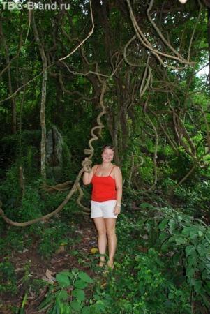 джунгли однако