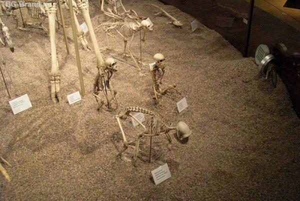 Фрагмент колонны скелетов.