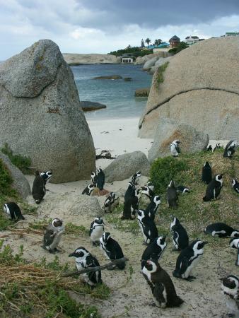 Страна Пингвиния