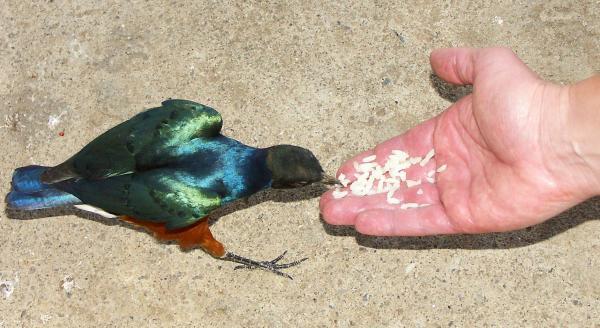 Прикармливаем Синюю Птицу Удачи :о)