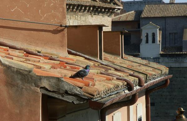 Мелодия старых крыш