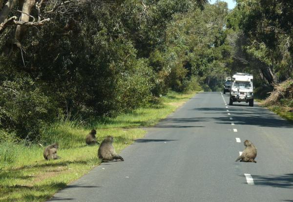 Дороги Африки - ЮАР