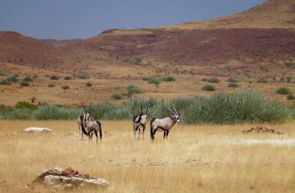 Ландшафты Африки - Намибия